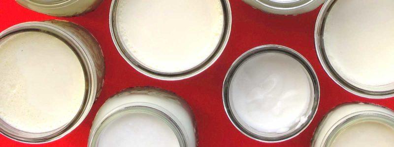 Brod and Taylor Science of Yogurt