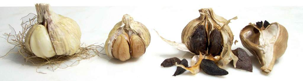 Stages of Black Garlic